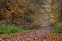 Down the Forest Track by David Tinsley