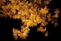 Nächtliche Herbststimmung by Simone Marsig