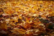 Wenn Herbstblätter die Wege verziert. von Simone Marsig