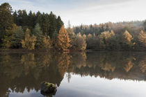 Autumn Reflected - 4 by David Tinsley