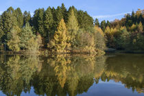 Autumn Reflected  by David Tinsley
