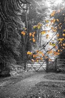A Hint of Autumn by David Tinsley
