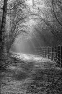 Down the Sunlit Path by David Tinsley