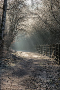 The Old Railway Line by David Tinsley