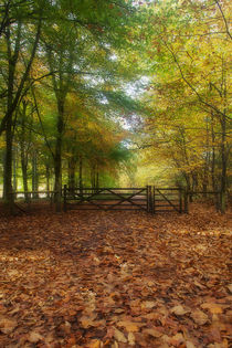 Gateway to the Forest by David Tinsley