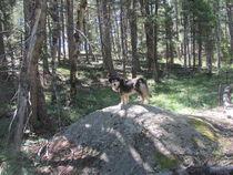 Rock-hound