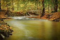 Chemnitzer Herbstimpression by moqui