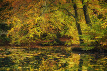 Herbst am Teich by moqui