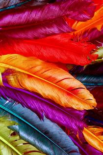 Feathers von lescapricesdefilles