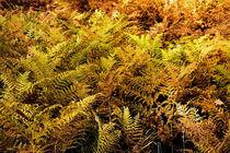 Jungle in Jermany by Hartmut Binder