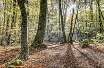 Fageda d'en Jordà, Autumn 2016 (Catalonia) by Marc Garrido Clotet