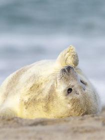Grüße vom Strand by moqui
