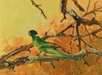 Port Lincoln Parrot by Geoff Amos