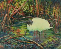 Ibis-australia-oil-on-board-24x30in-x