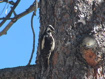 Still-life-with-woodpecker