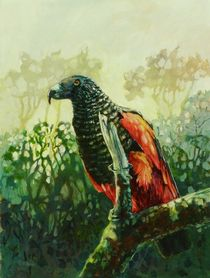 Pesquets-parrot-acrylic-on-board-12x16in-x