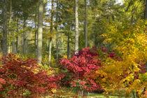 Arboretum-autumna