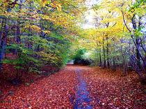 Herbstweg-bearbeitet