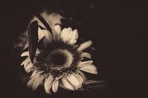Flowers-2876