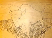 Sacred-white-buffalo-calf