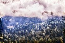 Tannenwald in den Wolken by Nicc Koch