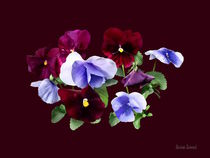 Maroon And Purple Pansies von Susan Savad