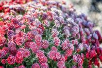 Flowers 999016 von Mario Fichtner
