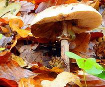 pilze vor dem frost von hedy beith