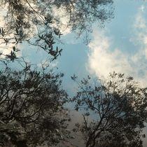 10112016tree-reflected5