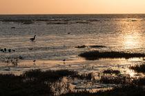 Wattenmeer-im-sonnenuntergang