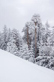 Winterkleid von Johannes Netzer