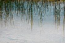 Gras III von Bernd Seydel