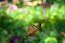 Leaf and spider von mnwind