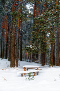 Winter. Forest. Bench by mnwind