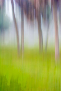 Abstract Moving Trees #1 Background Green by Eugene Norris