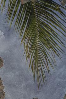 Palmwedel von mroppx