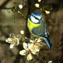 Stillleben mit Blaumeise von Chris Berger