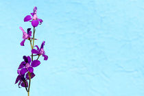 Purple Delphinium Space to Think Print by John Williams