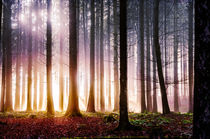 'Herbststimmung im Wald' von Nicc Koch
