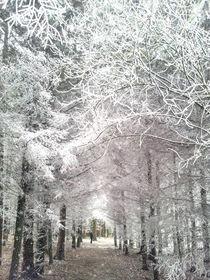 Through the winter forest - Durch den Winterwald by Chris Berger