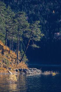 [:] PINE TREES [:] von Franz Sußbauer