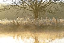 'Kalte Landschaft' by Bernhard Kaiser