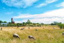 Schafe am Kap Arkona von mnfotografie