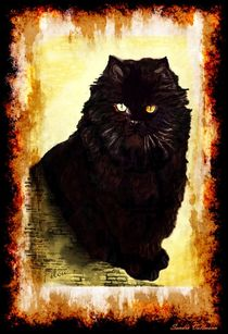 BLACK CAT by Sandra Vollmann