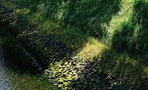 Der Grünstreifen  |  The Green Grass Way  |  La Ruta Verde