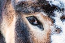 Das Auge vom Esel by mnfotografie