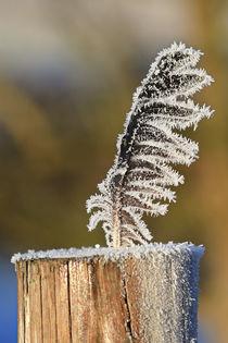 'Die gefrorene Feder' by Bernhard Kaiser