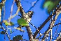 the bird  by Lucas  Queiroz