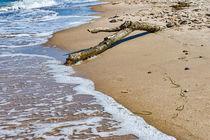 Baumstamm am Strand by mnfotografie