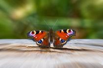 Schmetterling Tagpfauenauge by mnfotografie